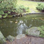 Fish in the pond at Tamagawa Garden